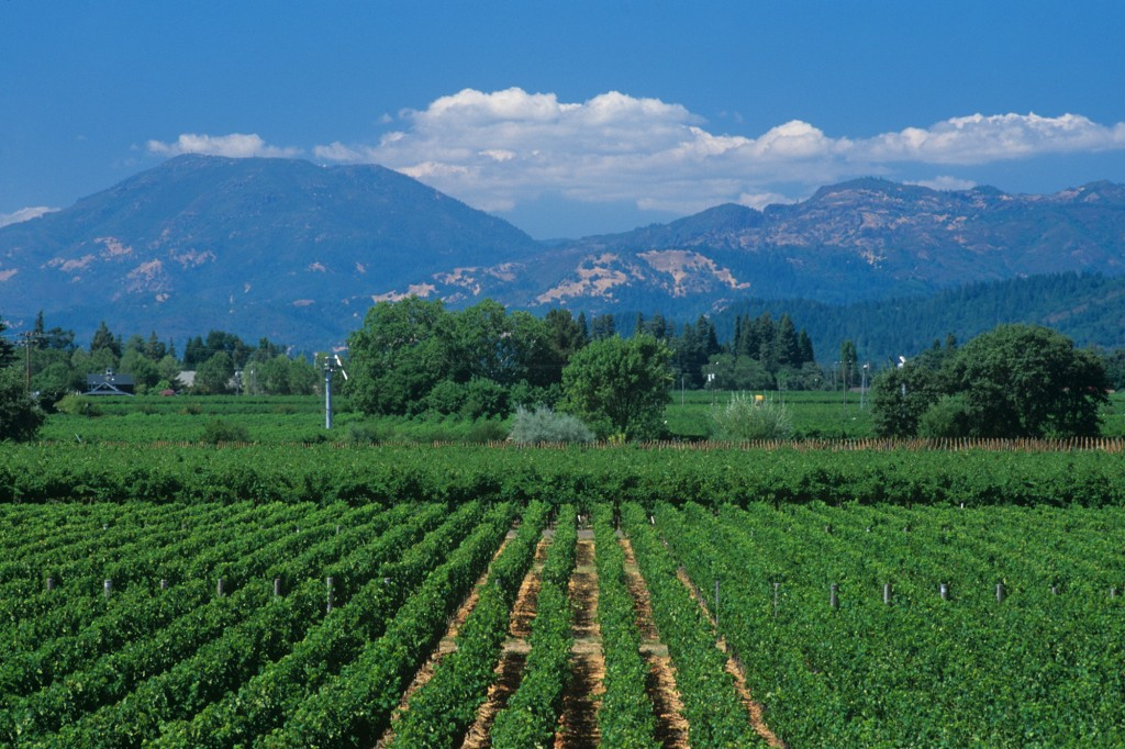 Looking across a vineyard to the city of Calistoga in the Napa Valley. Mount Howell dominates the surrounding mountains.